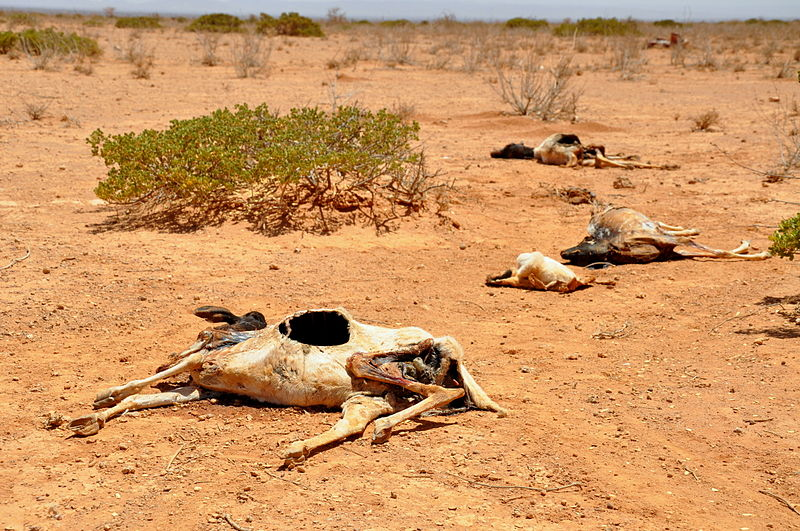 Hungersnoed_Horn_of_Africa