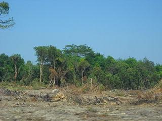 skog Indonesia